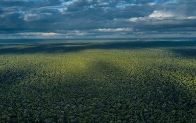 Gorongosa National Park Turns 60