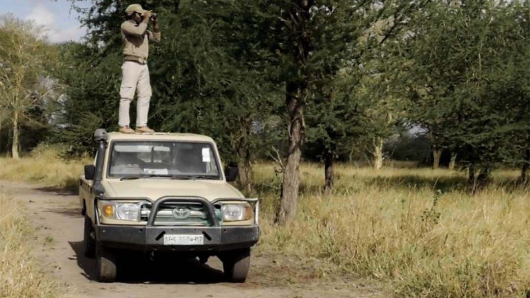 Victor Américo in the field counting impalas.