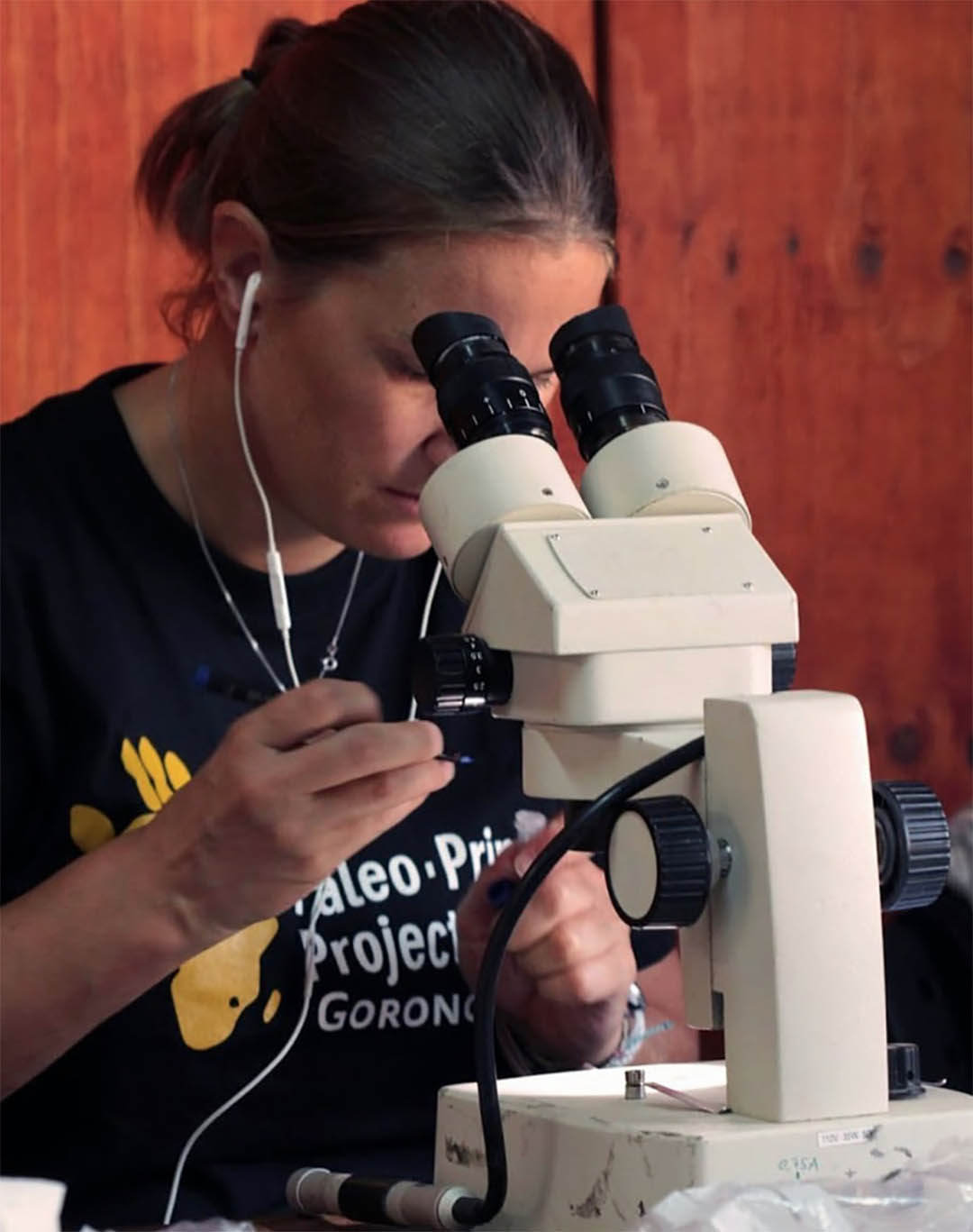Tina Lüdecke working at the E.O.Wilson Lab at Gorongosa National Park, Mozambique